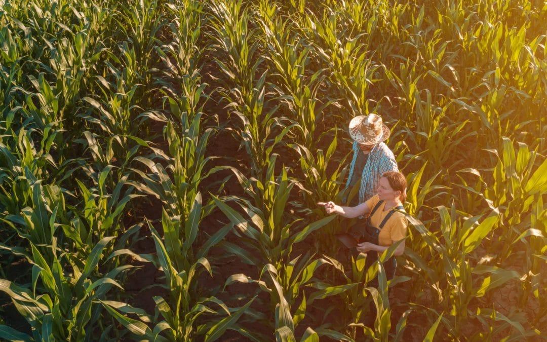 Female agronomist advising corn farmer in crop field